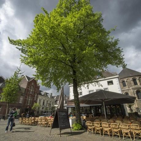 Waar zijn de oranjebomen in Maastricht gebleven?