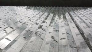 Dronebeelden tonen forse schade aan kassen door hagelbui