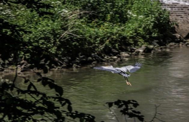 Scharrelkids gaan op inspectie langs de waterkant