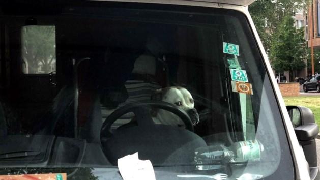 Hond dolblij na reddingsactie politie uit hete camper