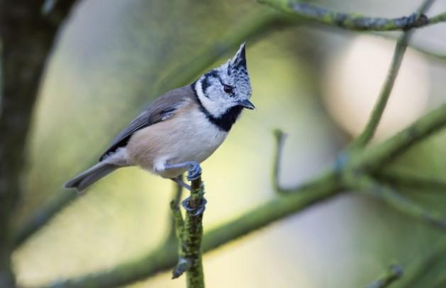 Tientallen beschermde vogels illegaal gevangen, drie mannen opgepakt