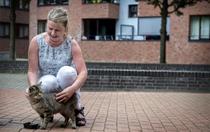 Heerlens stel neemt al vijftien jaar zorg voor zwerfkatten op zich