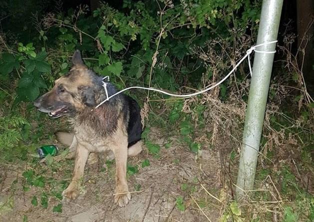 Achtergelaten dove hond met staar overleden