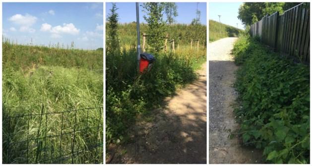 Onderhoud groen bij Buitenring Brunssum 'vergeten'