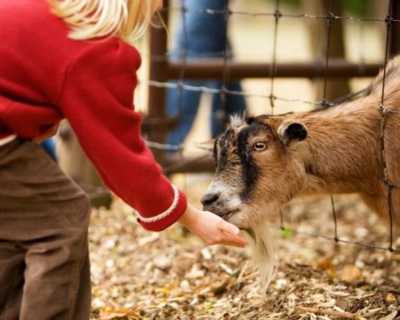 Toekomst van kinderboerderij Limmel gegarandeerd