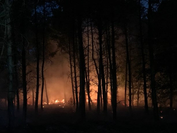 Brand in kurkdroog bos tussen Horn en Baexem