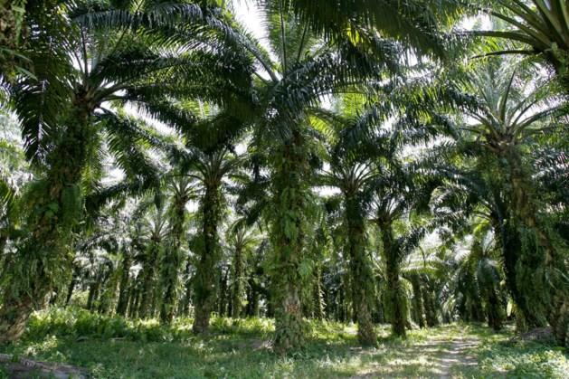 'Grote banken betrokken bij misstanden palmolie'