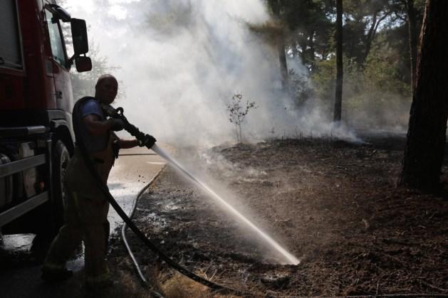 Brandweer blust bosbrand in natuurgebied bij Weert