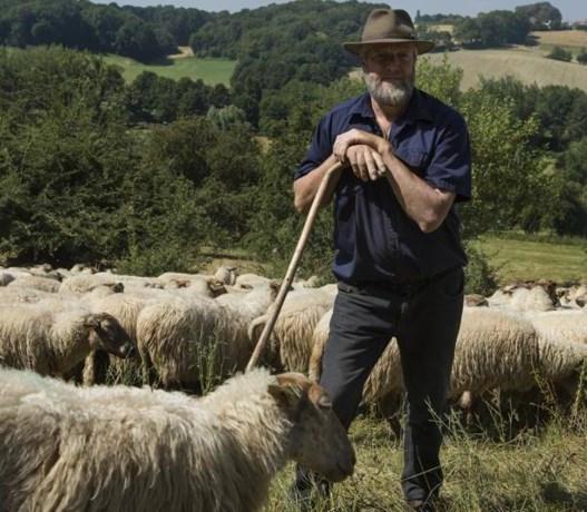 Toch steun voor schapen in Mergelland