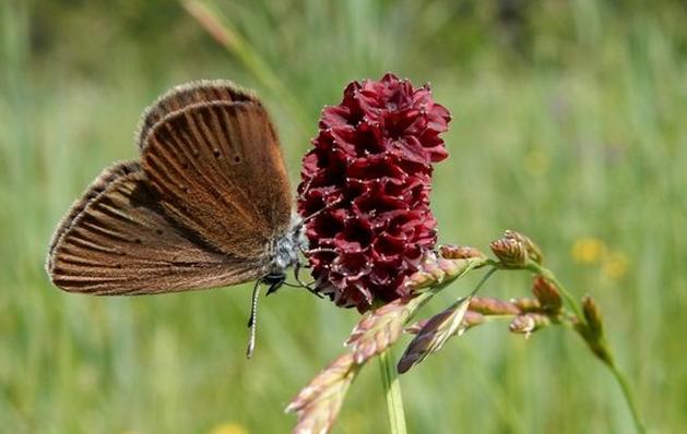 Leefgebied zeldzame vlinder in Posterholt vertrapt