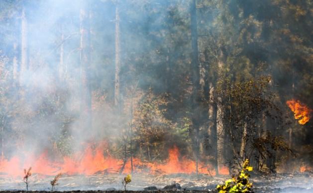 Brandweer rukt uit voor bosbrand in Weert