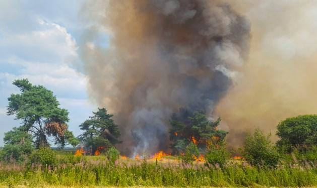 Verdachte opgepakt voor natuurbrand Hoge Veluwe