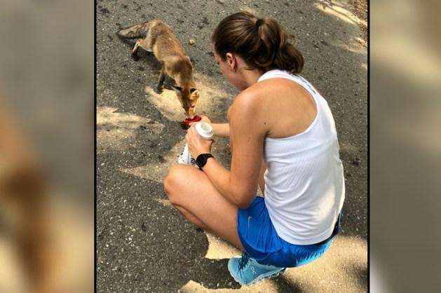 Aandoenlijk: dorstig vosje drinkt gulzig uit dopje hardloopster