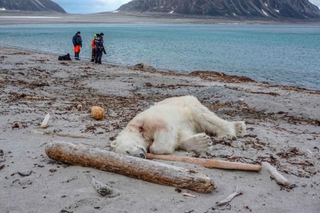 Kritiek op noordpoolcruises na doodgeschoten ijsbeer
