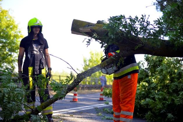 Boom over Rijksweg: N271 tussen Belfeld en Reuver afgesloten