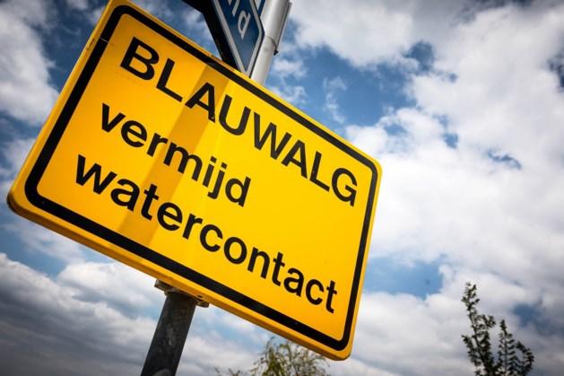 Waterschap waarschuwt voor blauwalg in vier zwemplassen