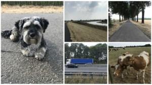 Dwars door Limburg 10: Roosteren - Sittard