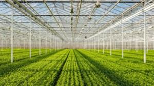 Vijftig hectare kassen Maasbree verwarmd door snoeihout