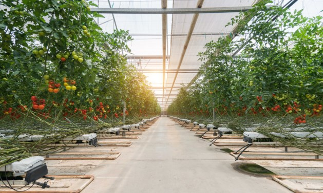 Minister van Landbouw: duurzaam eten vraagt hogere prijzen