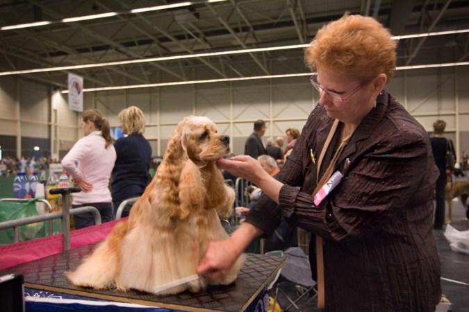 Hondenshow Maastricht onder de loep na kritiek