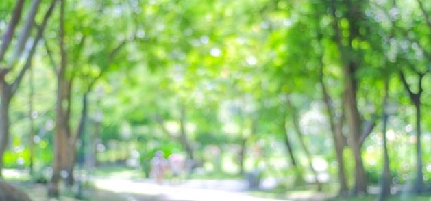 Bedenkingen bij plan voor Park Lichtenberg in Weert