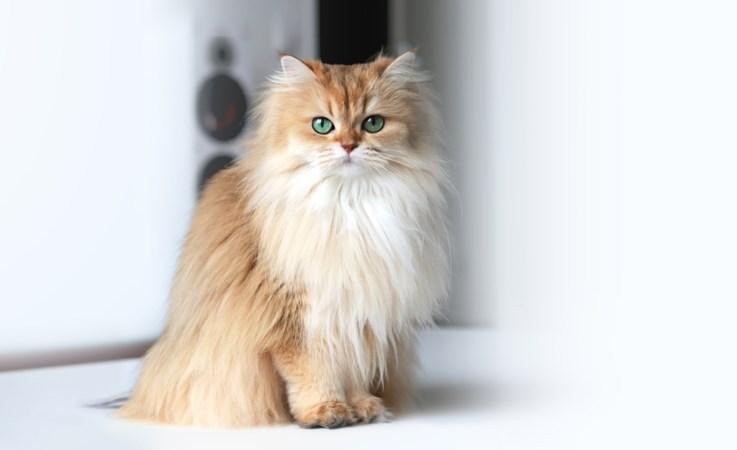 Leuk, instafamous katten, maar verdient het ook wat?