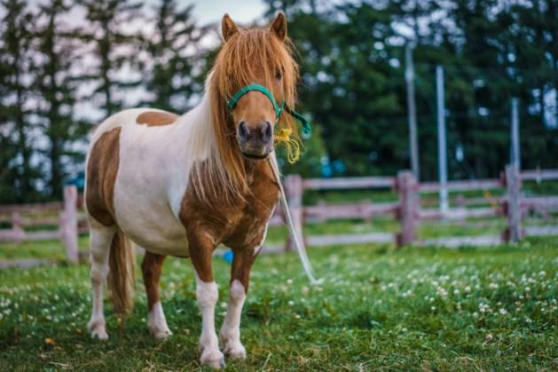 Verdachte pony-verkrachting psychiatrisch onderzocht