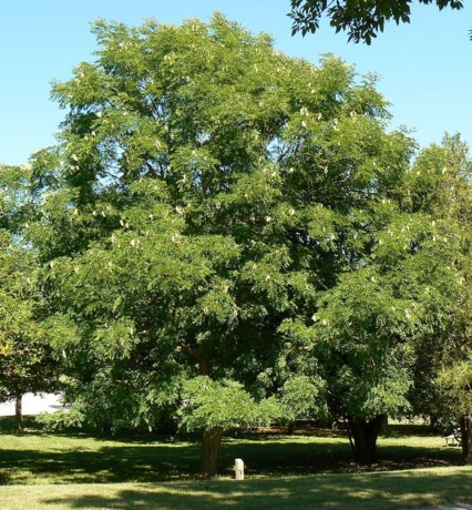 Bomen, bankjes en bakken in middenberm van Stationsstraat