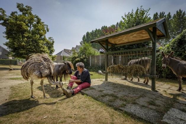 Met sluiting bedreigde kinderboerderij kan subsidie vergeten