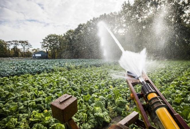 Uitzonderlijke droogte in de herfst: boeren beregenen gewassen
