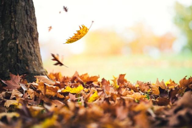 Échte herfstweek op komst
