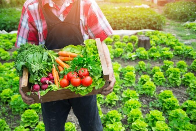 De tuinbouw als apotheek van de toekomst