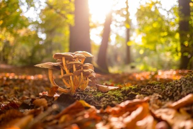 Rampjaar voor veel paddenstoelen