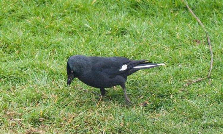 Hoe herken je de vogels aan de voedertafel?