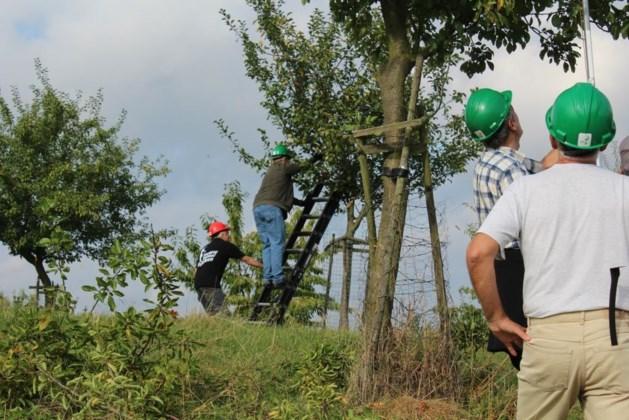 IKL-cursus bomen snoeien in Haelen
