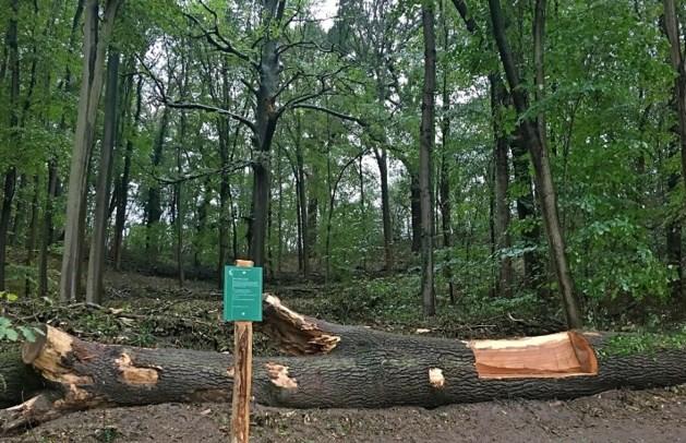 Omgezaagde boom in Cannerbos krijgt 2e leven als zitbank