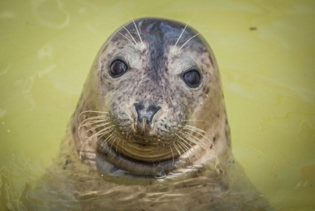 Visser gered van klif na aanval van vijftig agressieve zeehonden