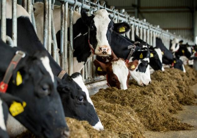 Boeren in spanning: mogelijk minder vee