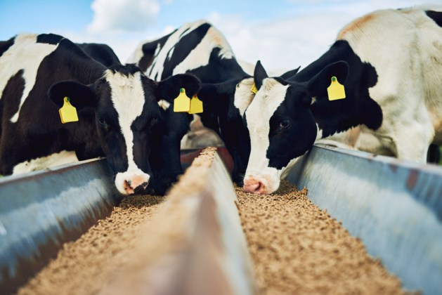 Zorgen om uitbreiding veevoederbedrijf Havens in Maashees