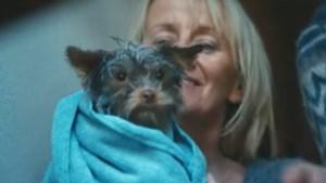 Video: Het echte verhaal achter zielig loterijhondje Frekkel