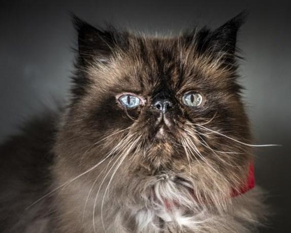 Furby, de Kesselse kat met een eigen Instagramaccount