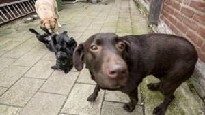 Gemeentelijke controle hondenbelasting