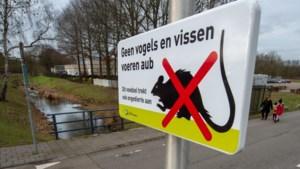 Strijd tegen rattenoverlast bij Sittardse Molenbeek