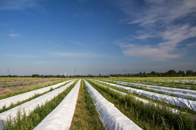 Politiek bemoeit zich met machtsstrijd om Limburgse asperge