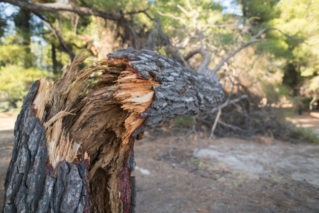 Bomen waaien om door storm