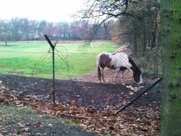 Campagne moet eenzaamheid onder paarden tegengaan
