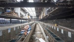 NVWA: geen extra actie tegen nertsenfokker Ubachsberg
