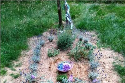 Man laat echtgenote opnieuw begraven na heibel over een plantje