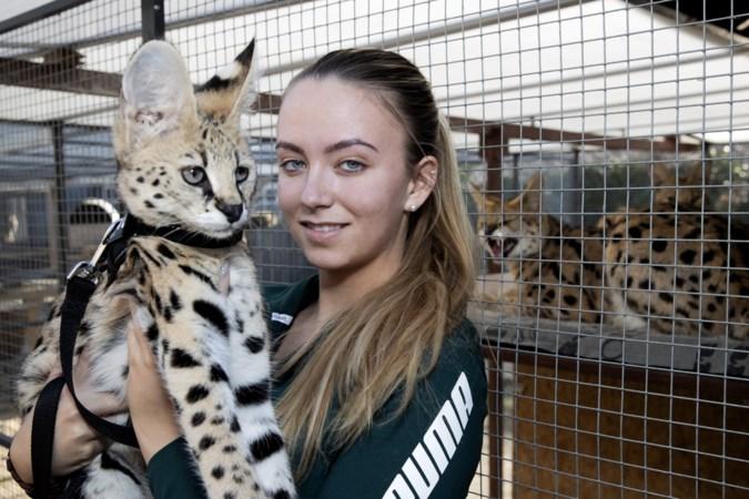 Kun je een serval gewoon als huisdier houden?