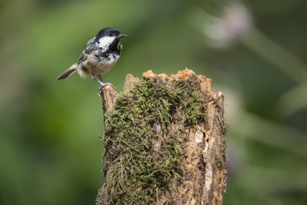 Vogelexcursie met IVN Nuth